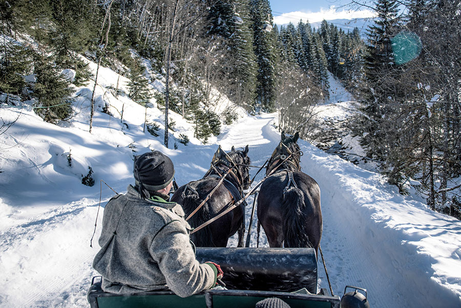 Romantic horse-drawn carriage ride